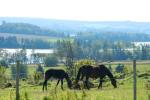 MacPhee Horses