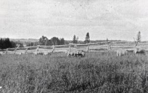 McLean's - Meadowbank